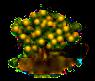 Affenorangenbaum.png