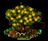 Affenorangenbaum xl.png