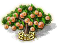 apricot_upgrade_2_Icon.png