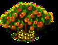 Aprikosenbaum xxl.png