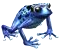 aquamarineFrog.png