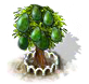 Avocadobaum xl.png