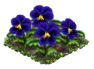 bluepansy.png