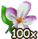 Blumenblüte 100.png