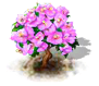 bougainvillea_upgrade_0_Icon.png
