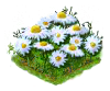 chamomile_Icon.png