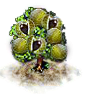chestnut_Icon.png