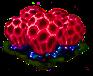 clathruscrispus_Icon.png