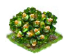cobnut_Icon.png