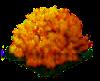 coralmushroom_Icon.png