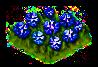 cornflower_Icon.png