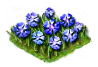 cornflower_Icon.png