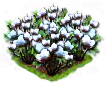 cotton_Icon.png