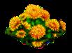 crysanthemum_Icon.png