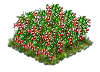currant_Icon.png