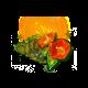 dailyqapr2021q2dayflower_big.png