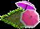 dailyqIjun2020parasolplant.png