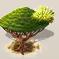 Drachenblut-Frucht.png
