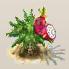 Drachenfrucht.png