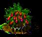 Drachenfruchtbaum xl.png
