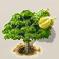 Durianfrucht.png