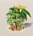 Eukalyptus 1.png