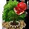 Granatapfelbaum-XL.png