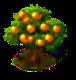 Grapefruit-Baum.png