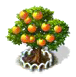 Grapefruit-Baum xl.png