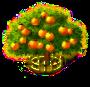 Grapefruit-Baum xxl.png