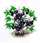 jabuticaba_upgrade_0.png