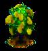 Jackfruchtbaum.png