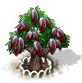 Kakaobaum xl.png