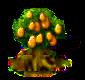 kumquat_Icon.png