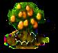 Kumquatbaum xl.png