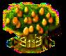 Kumquatbaum xxl.png