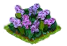 lilac_Icon.png