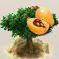 Louquat-Frucht.png