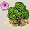 Magnolien.png