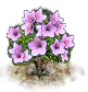 Magnolienbaum.png