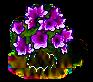 Magnolienbaum XL.png