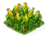 maize_Icon.png