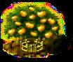 Mandarinenbaum xxl.png