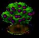 Mangostanbaum.png