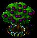 Mangostanbaum xl.png