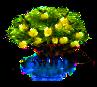 Mangrovenbaum.png