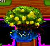 Mangrovenbaum xl.png