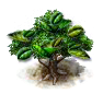 mate_upgrade_0_Icon.png