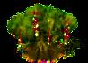 Meertraubenbaum.png