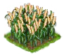 millet_Icon.png